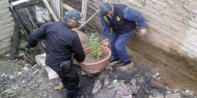 La policía confiscó las macetas. Foto:Policía Nacional del Perú. Imagen Por: