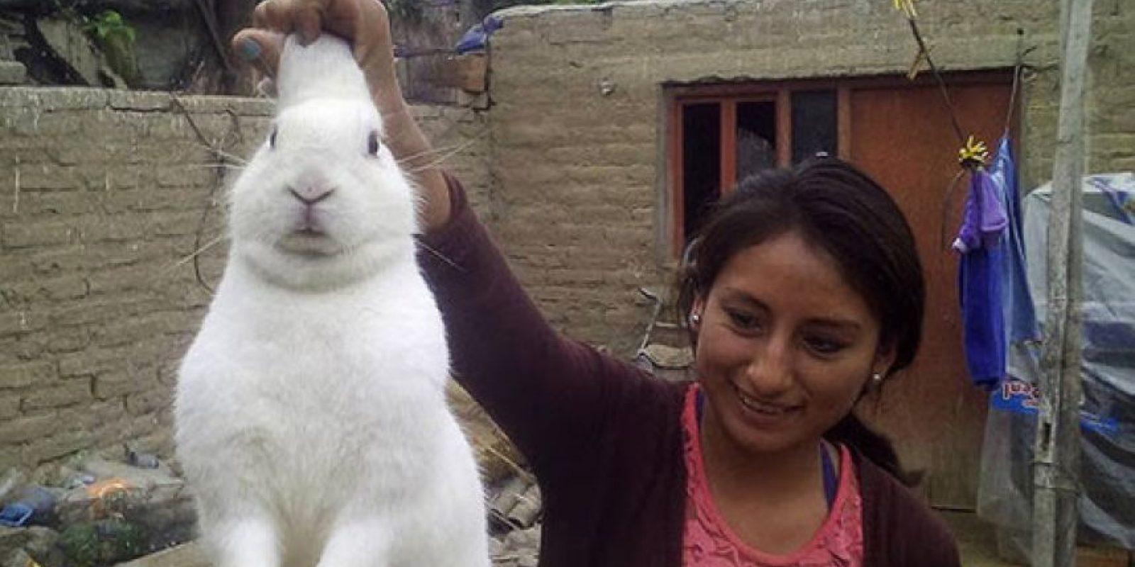 """""""Pinpon"""", el conejo que se escapaba a comer marihuana. Foto:Policía Nacional del Perú. Imagen Por:"""