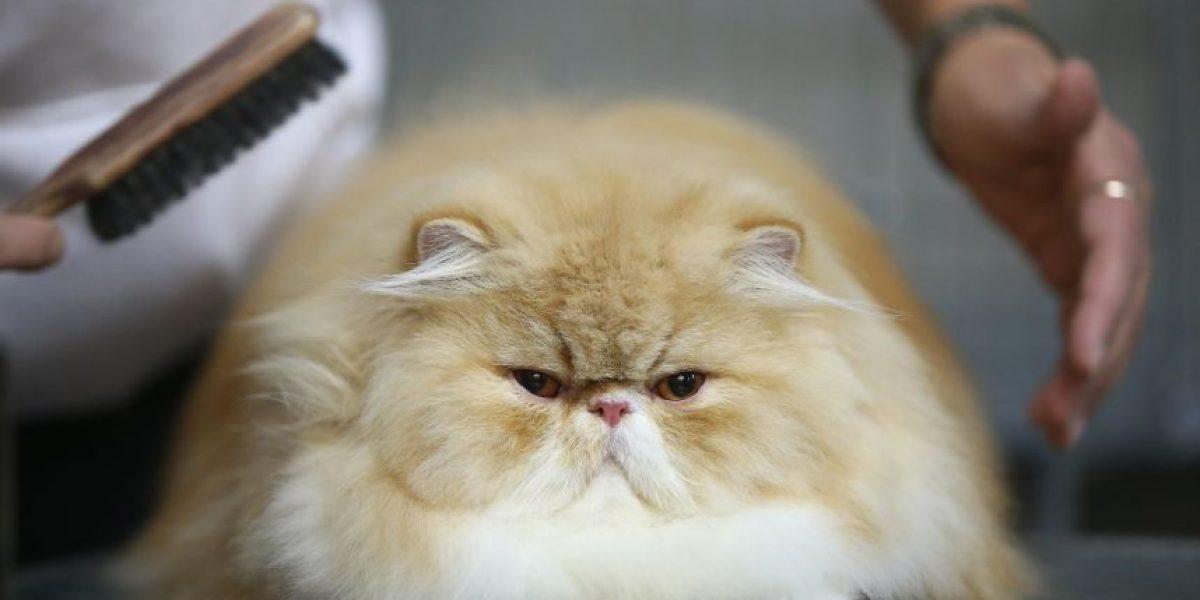 ¡Hoy es el Día internacional del gato!