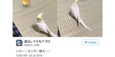 Los japoneses realmente creen que sus mascotas pueden ver a los pokémon. Foto:Twitter. Imagen Por: