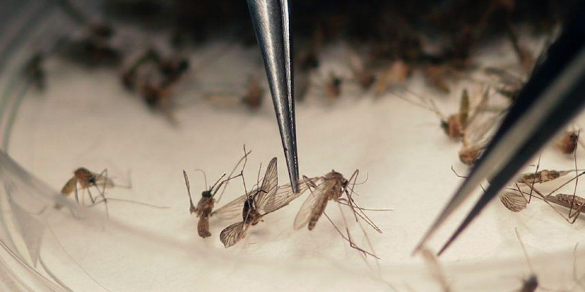 Se acelera la búsqueda para una vacuna contra el zika