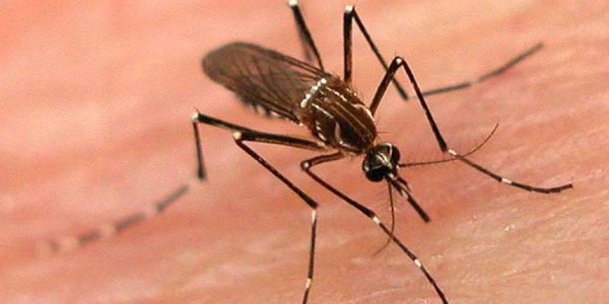 Dos casos de zika provinieron de Miami Beach