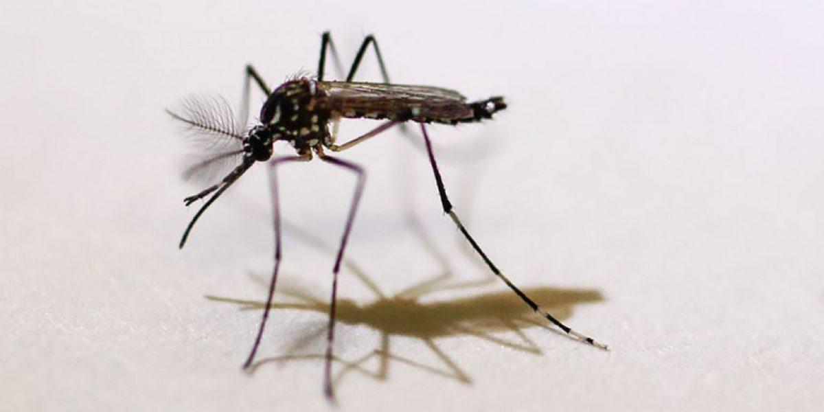 FEMA se suma a equipo contra zika