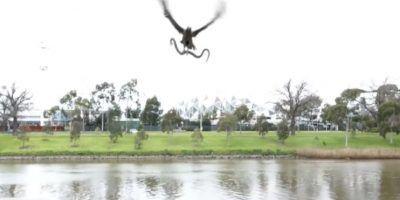El halcón y la serpiente es un símbolo milenario Foto:YouTube. Imagen Por: