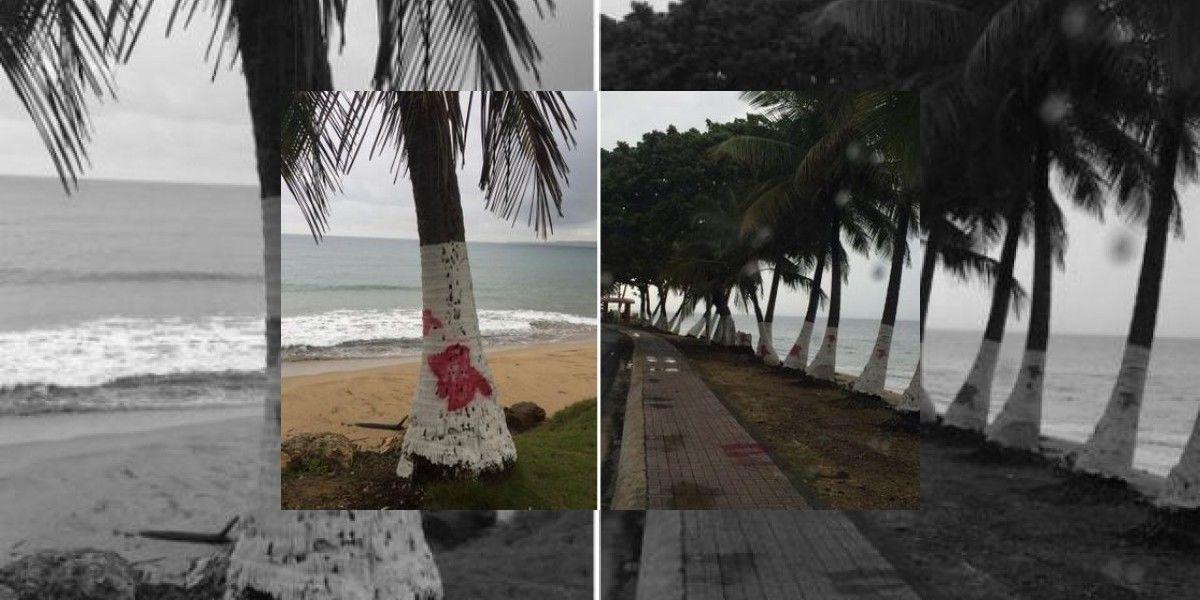 Alegan vandalismo con publicidad del PPD en Aguada