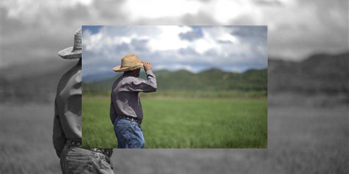Señalan que agricultura aporta hasta $6 billones al país
