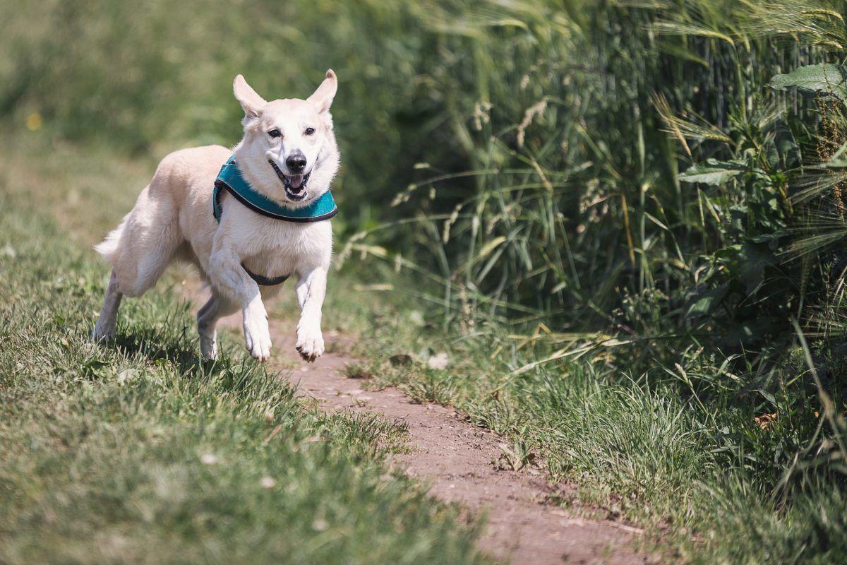 Encuentran a perro enterrado vivo y con un clavo incrustado en la cabeza. Imagen Por: Pixabay.com