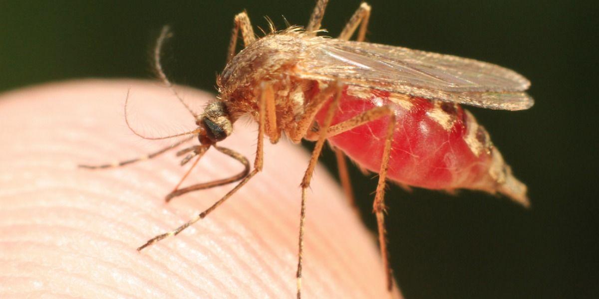 Se acercan a 30 mil los casos de zika en la isla