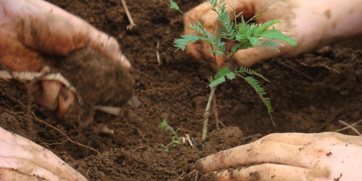 Jóvenes siembran árboles en Guaynabo