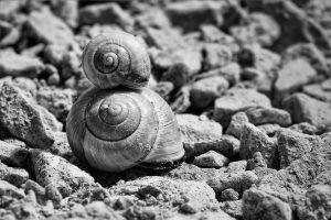 """Conozca la campaña para que el caracol """"Jeremy"""" no muera virgen. Imagen Por: Pixabay"""