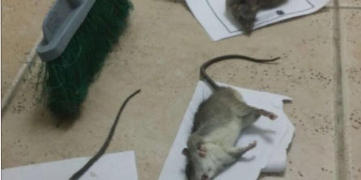 Difunden fotos de ratones en oficinas de Educación