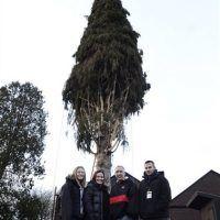 Rockefeller; Christmas Tree; Cutting; Oneonta; NY. Imagen Por: