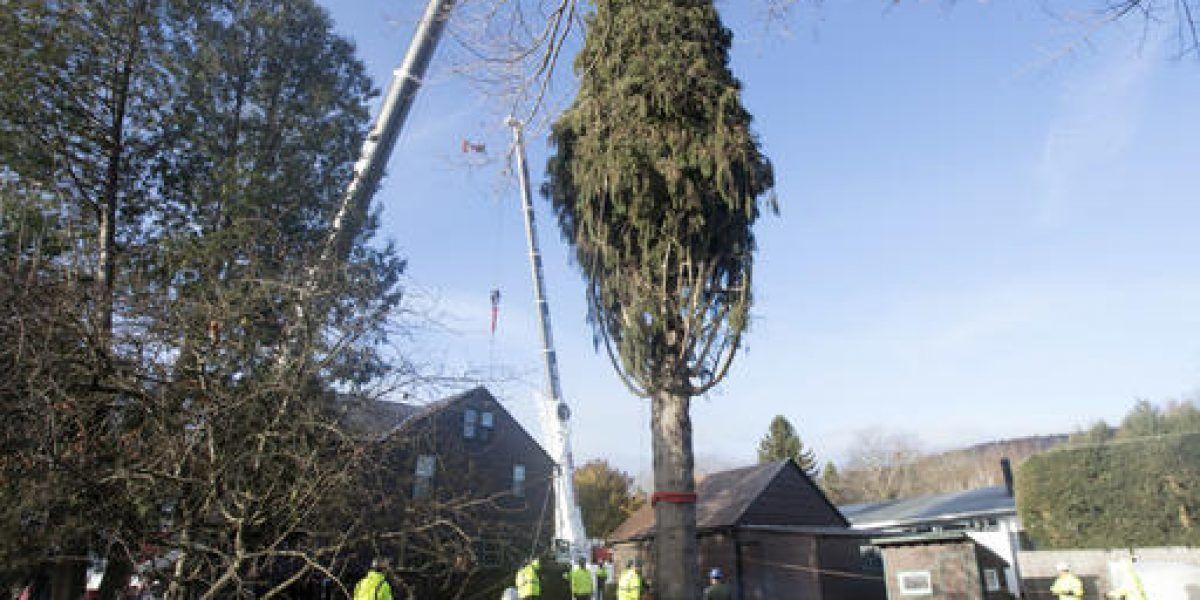 Enorme árbol de Navidad va camino al Rockefeller Center