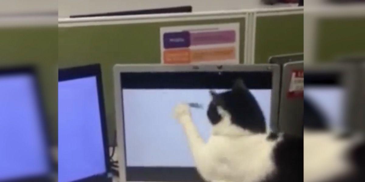 Mira esta creativa forma de entretener a tu gato por horas