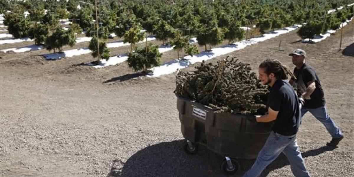 ¿Cerveza, vino o yerba? Denver aprueba la marihuana en bares