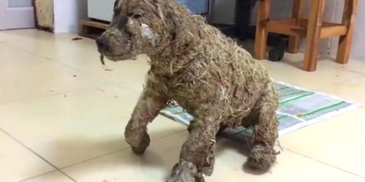 Niños bañan con pega y fango a un perro