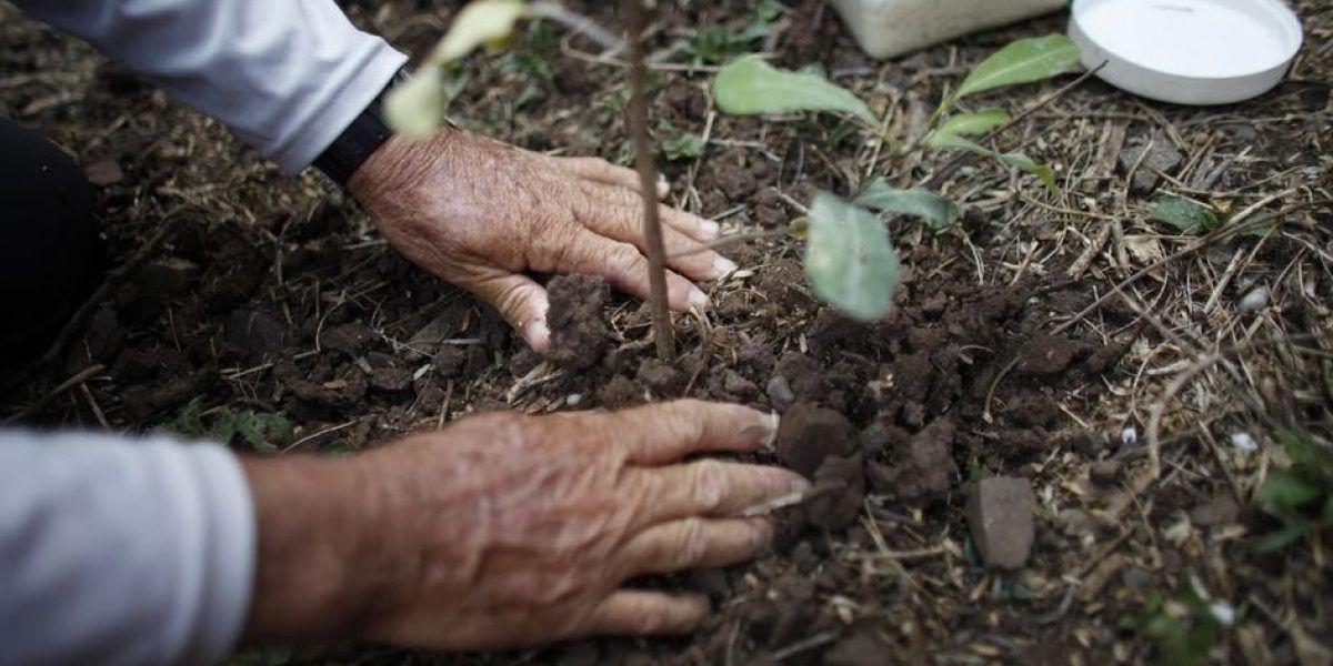 Llaman a participar de #UnDíaParaDar reforestando a Puerto Rico
