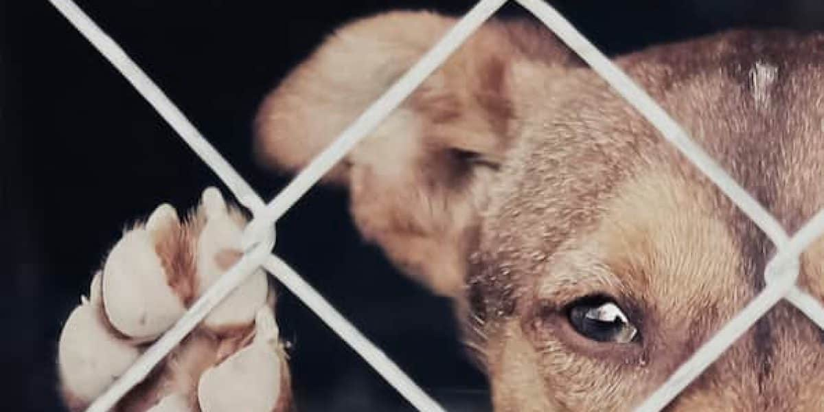 Arrestan policía por maltrato de animales en Guayama
