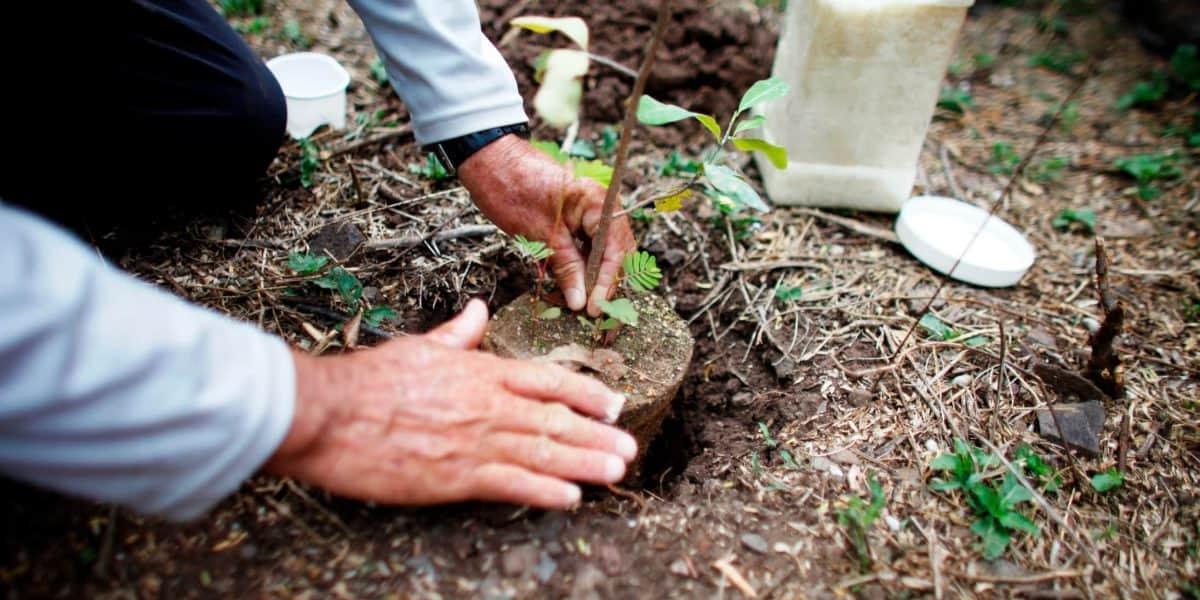 Para la Naturaleza se une a campaña de reforestación de Puerto Rico