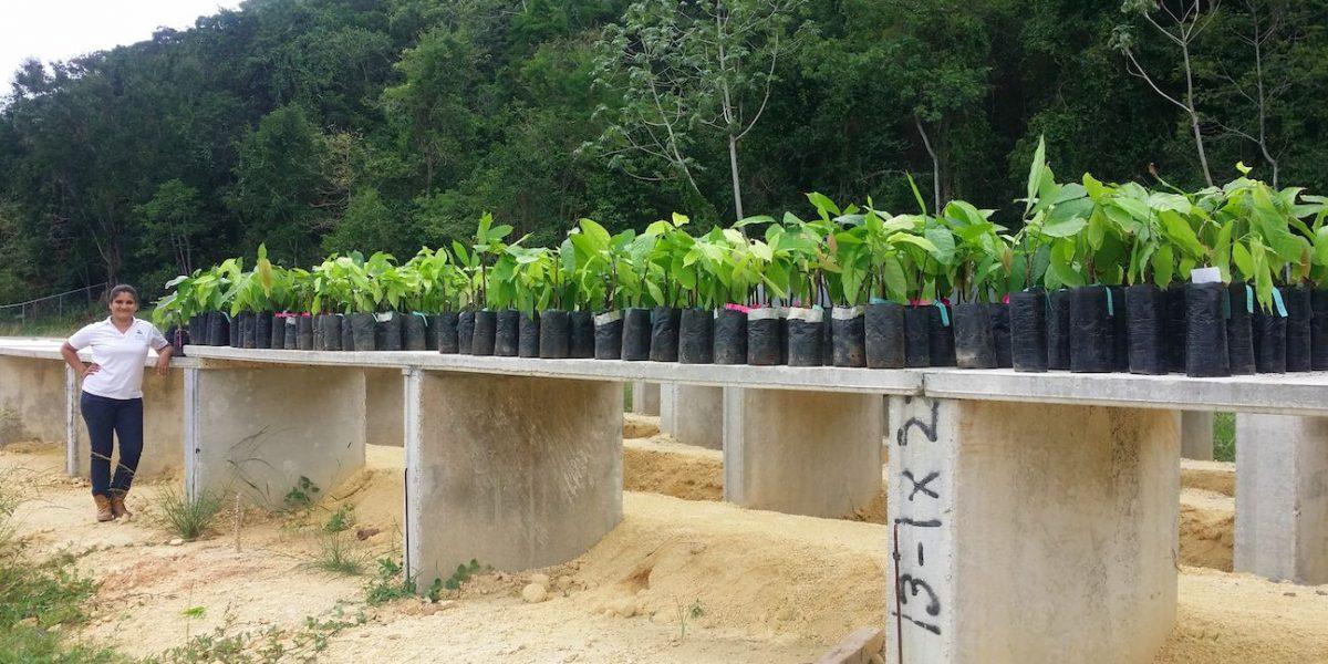 Cacao de Puerto Rico para el mundo