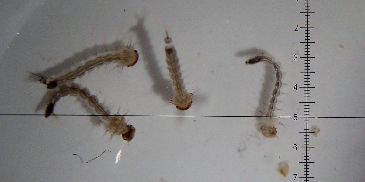 Confirman cuatro casos más de transmisión local de zika en Texas