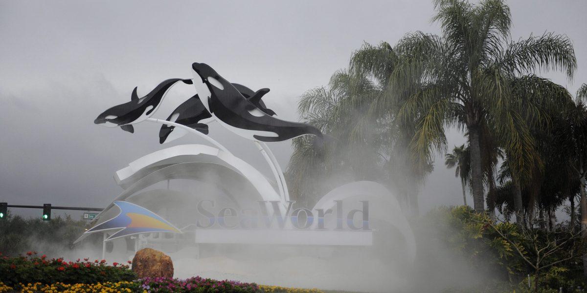 SeaWorld abrirá parque temático sin orcas en el 2022