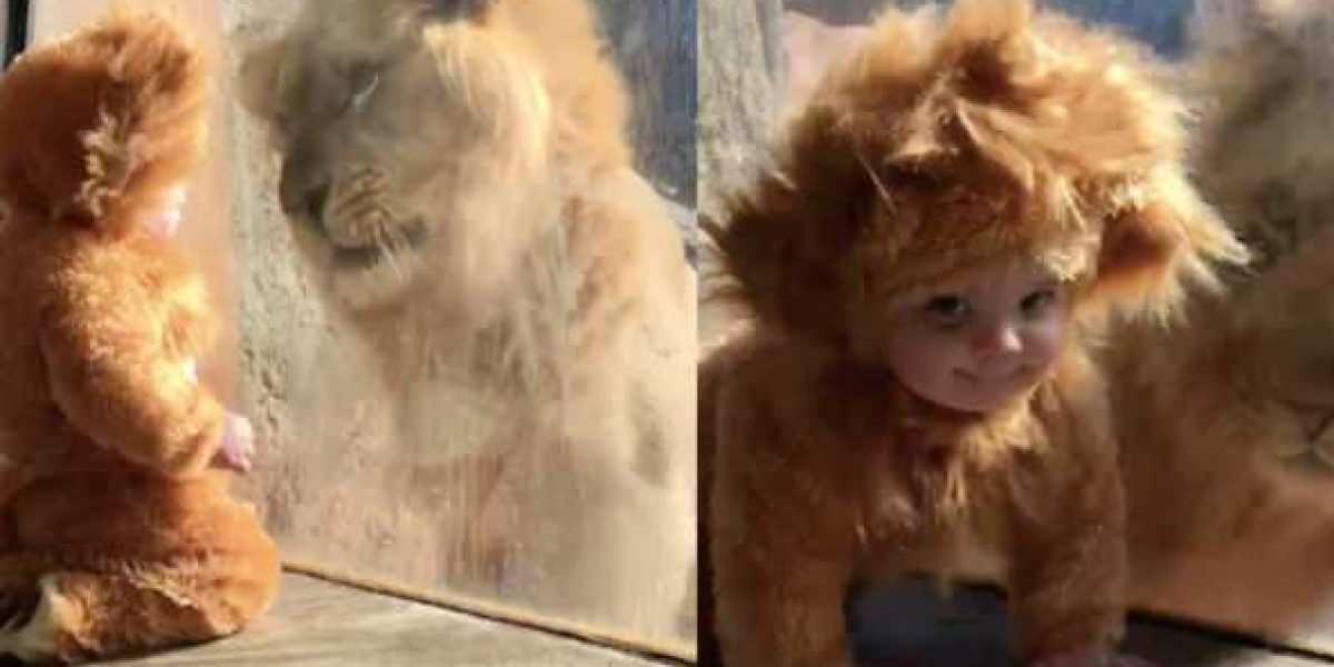 Tierno encuentro entre un bebé y un león