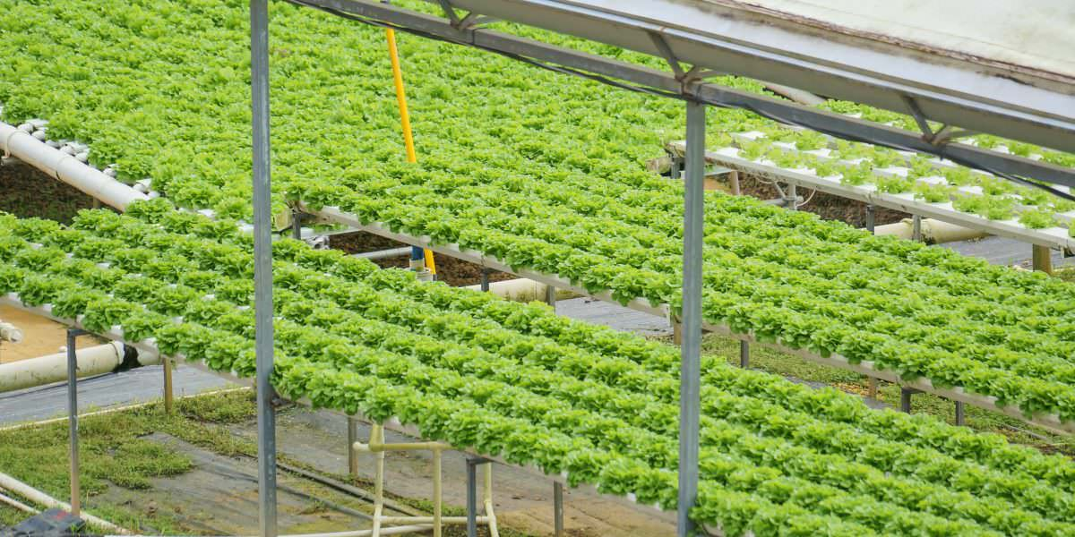 """""""Lo Mejor de la Cosecha""""  fortalece nuestra agricultura para el 2017"""