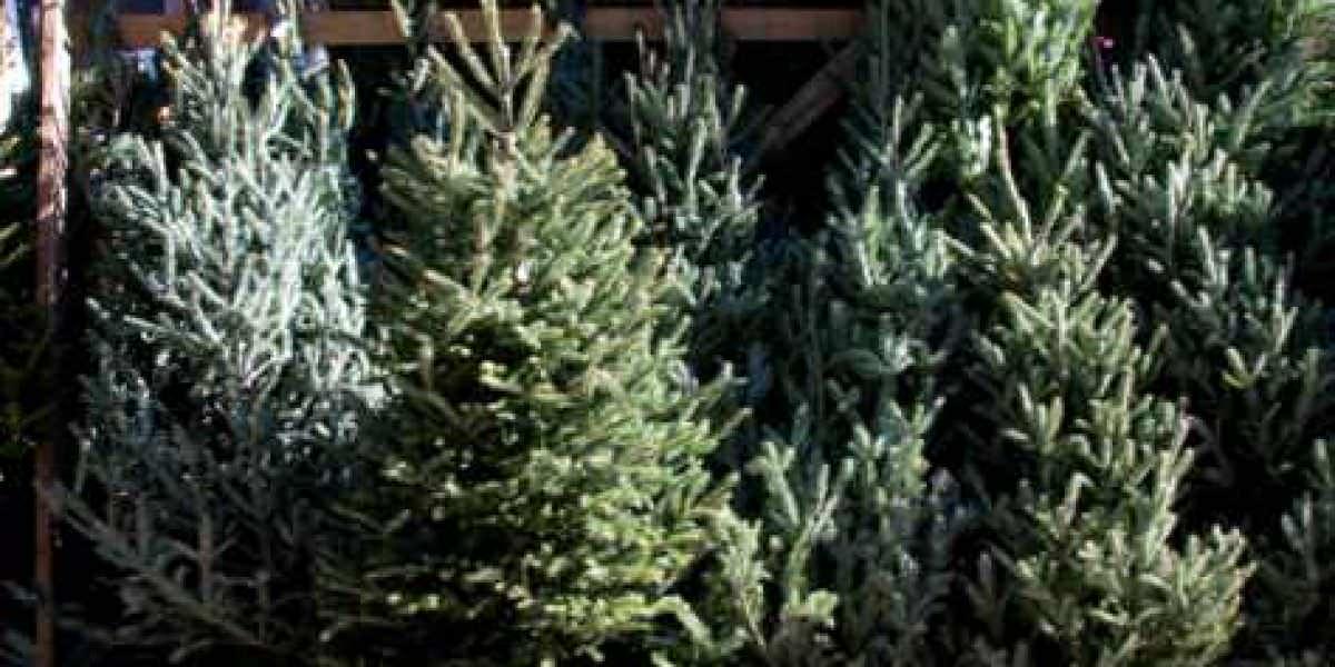 Qué se puede hacer cuando el árbol de Navidad se seca