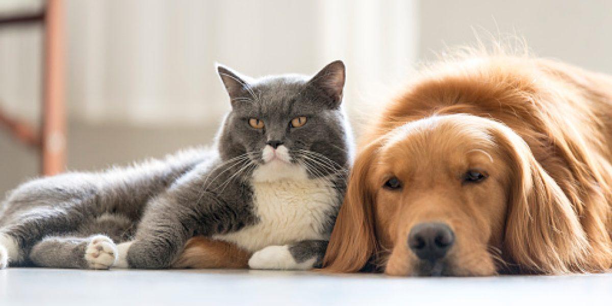 Mujer deja herencia millonaria para perros y gatos