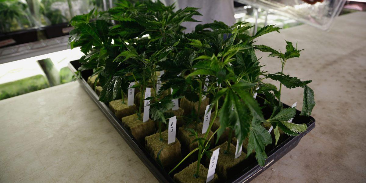 Familia de niño epiléptico recibe primer envío marihuana medicinal de Florida