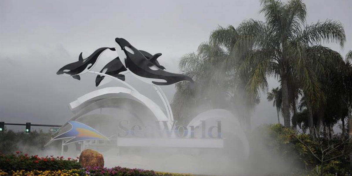 Muere Tilikum, la orca asesina de SeaWorld que protagonizó