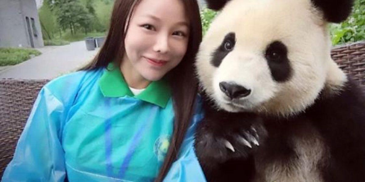 Conoce al bebé panda que posa para las selfies
