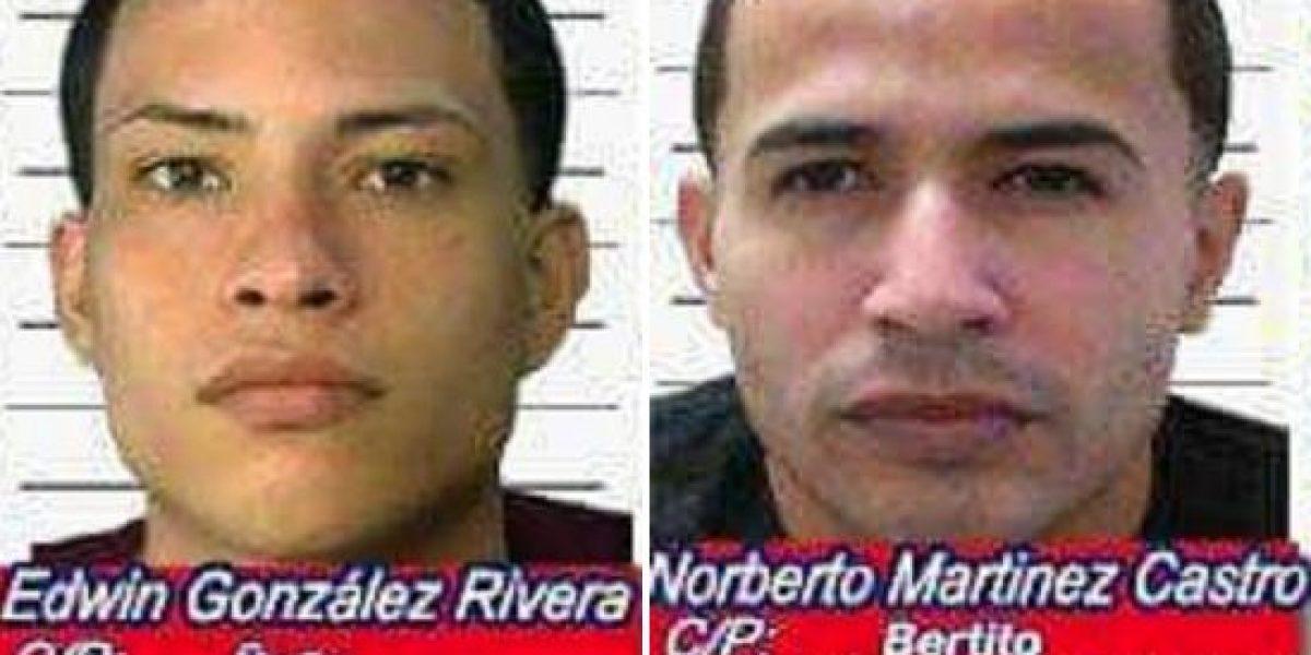 Agarran en Juncos a dos de los más buscados de Ponce