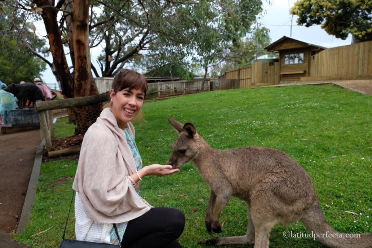 santuario-tasmania