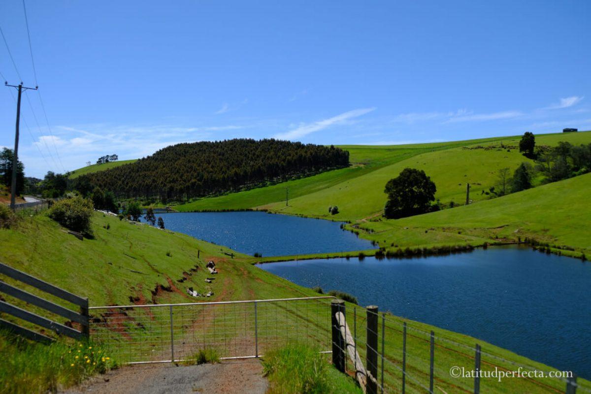 tasmania-nature-latitud-perfecta