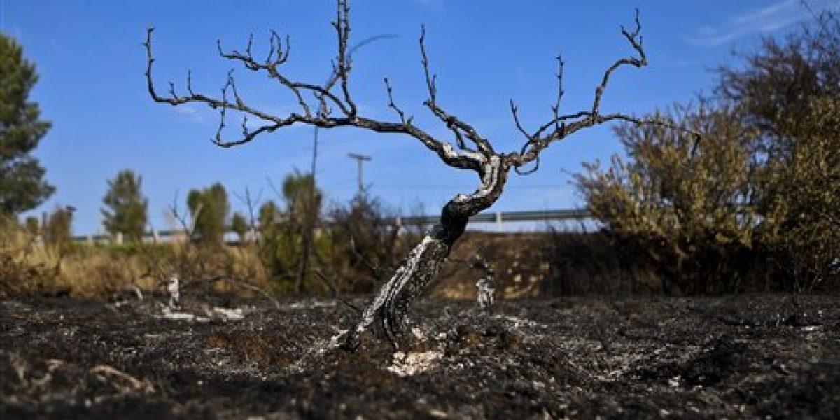 Incendios en Chile están