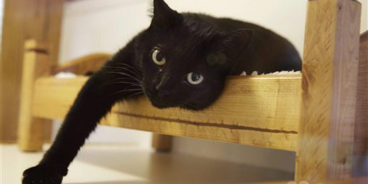 Nueva Jersey quiere prohibir desgarre de gatos