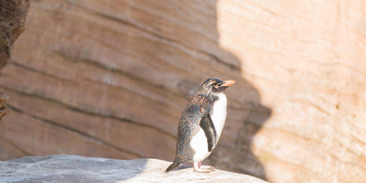Roban pingüino en un zoológico en Alemania