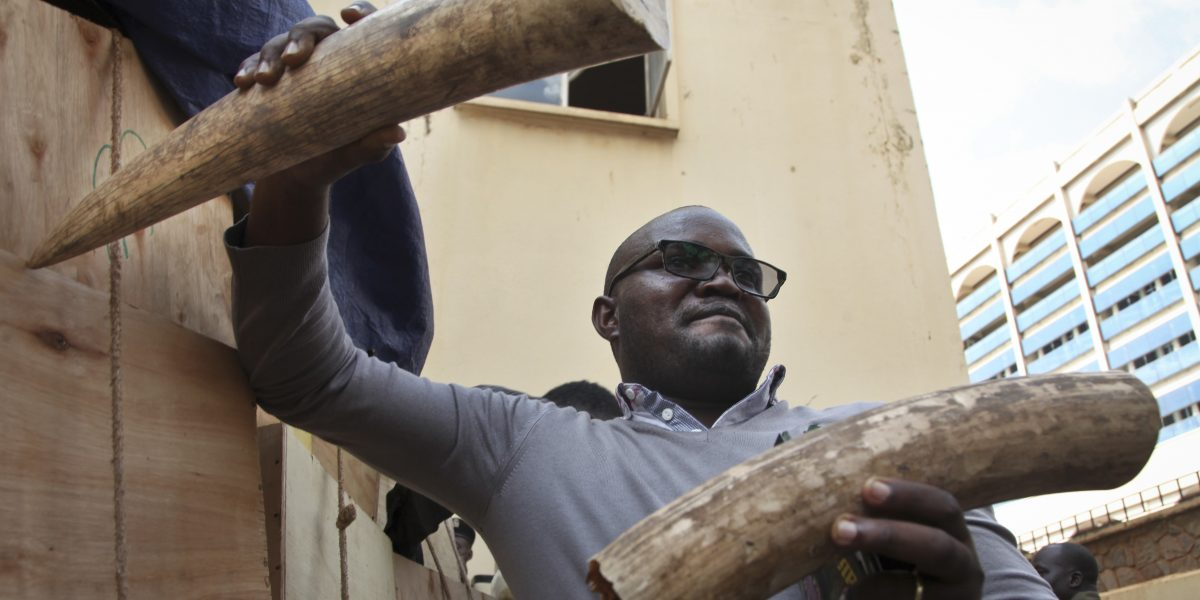 Confiscan marfil ilegal en Uganda