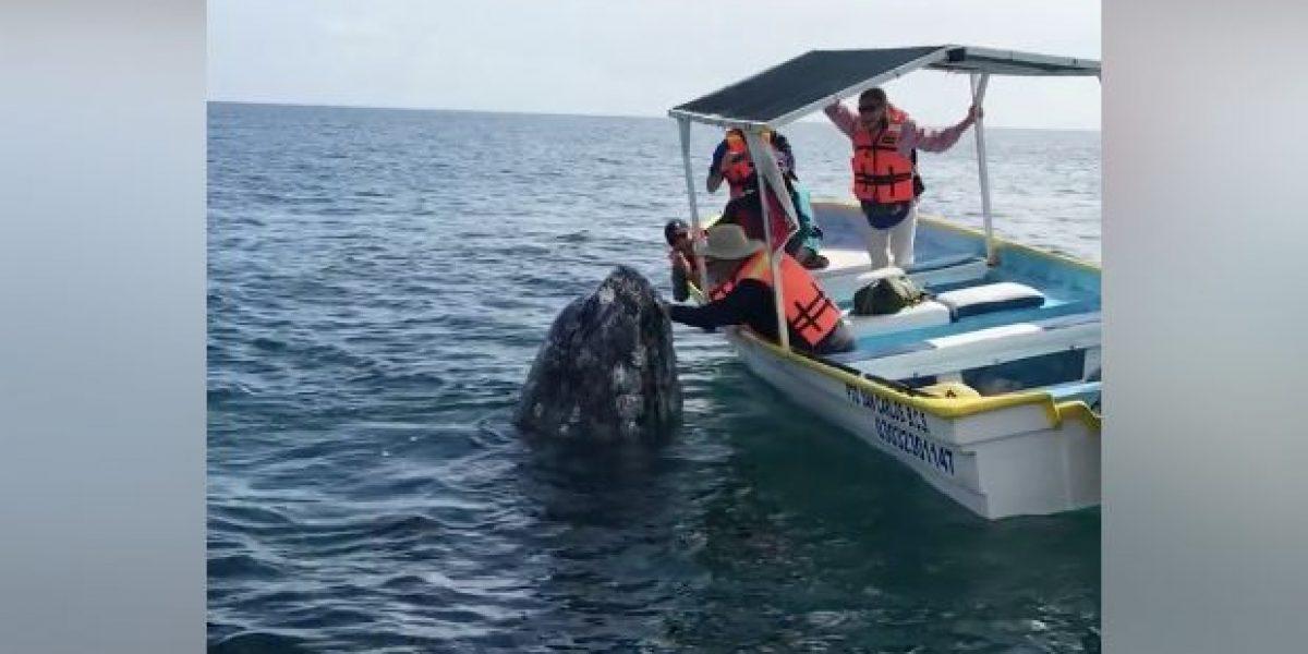 Tierna reacción entre ballena y turista