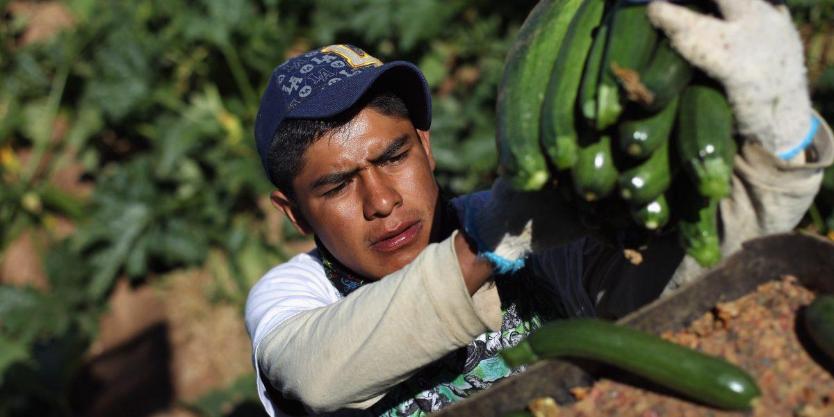 Manos de inmigrantes, esenciales en la agricultura de EE. UU.