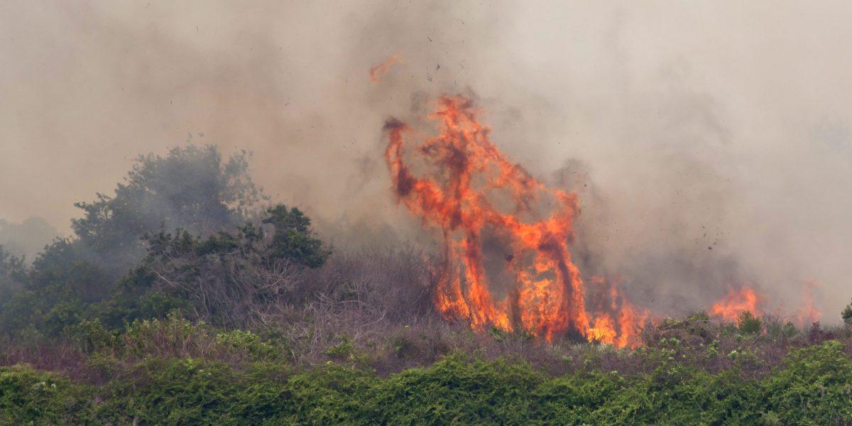 Incendio consume cientos de acres en Miami