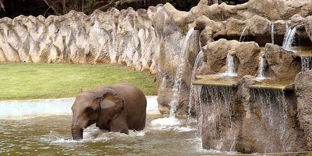Solicitan traslado de animales del Zoológico de Mayagüez