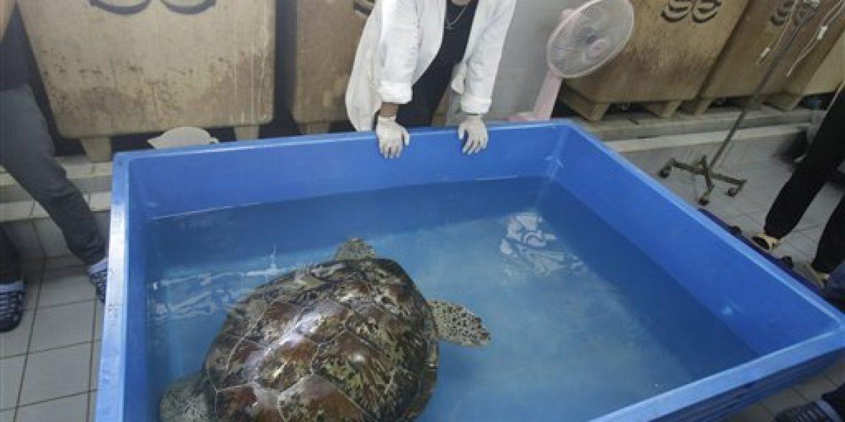 Salvan tortuga que se tragó más de 900 monedas