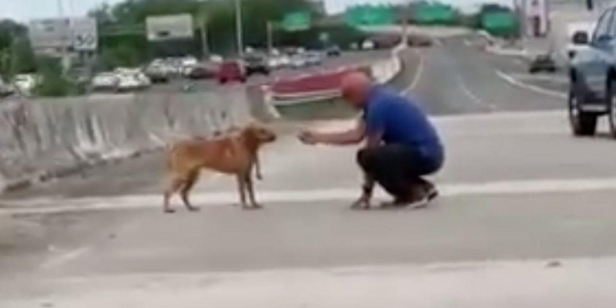 [Video] Viral las imágenes de hombre rescatando a perro en expreso Las Américas
