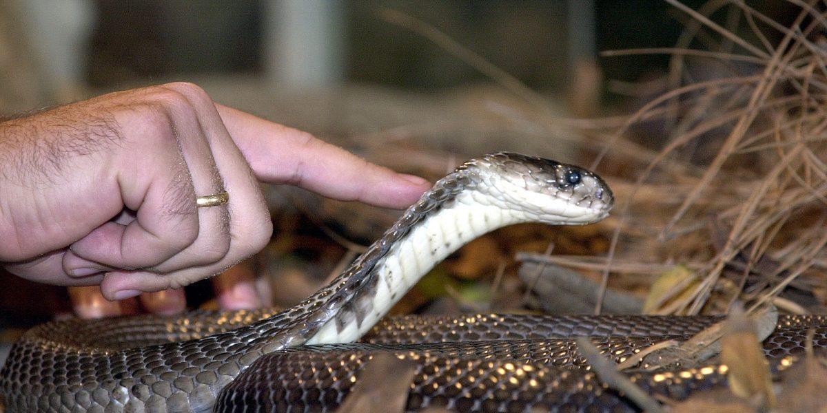 Serpiente cascabel muerde a niño que la confundió con un juguete
