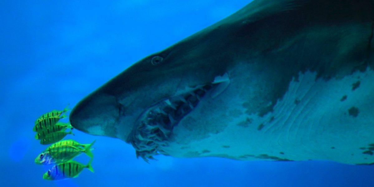 Joven relata ataque de tiburón en playa de Florida