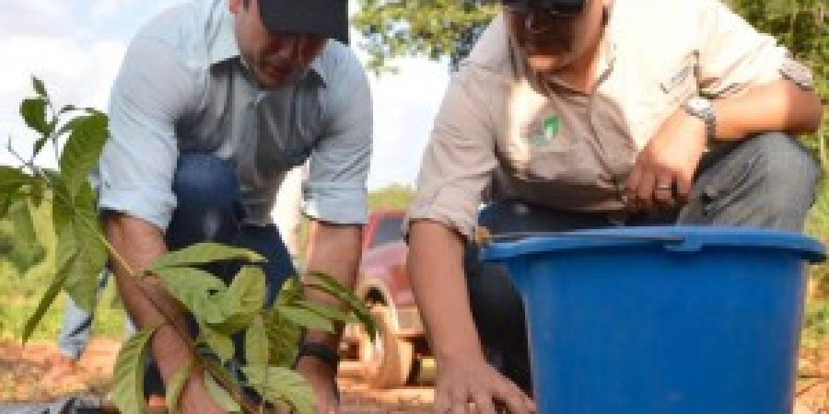 Rosselló participa de primera cosecha de café de empresa boricua