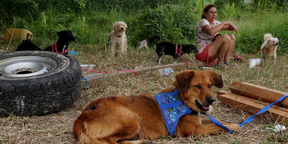 Cientos de animales de Puerto Rico llegan a Florida en búsqueda de hogar